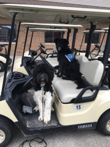 Deafinitely Dogs! Annual Charity Golf Outing