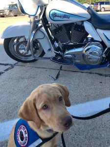 Service Dog in Training with motorcycle from Black Stock Motorcycle Company