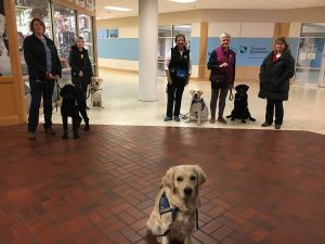 service dogs in training learning at lindale mall