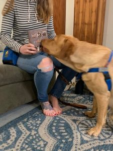 service dog in training sniffing a book in order to learn how to identify objects